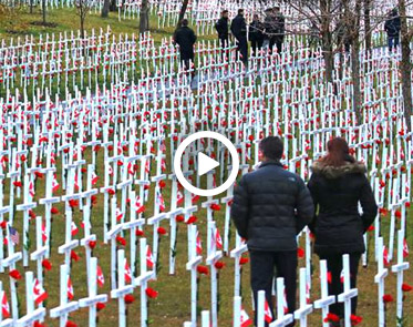 Calgary students lay 3200 silk flowers to honour fallen soldiers calgary students from delta west academy placed a silk flower on each of the 3200 crosses at the field of crosses on memorial drive thursday mightylinksfo